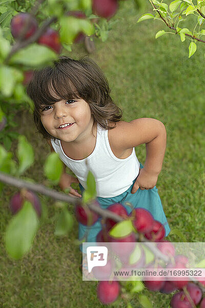 Cute toddler looking up at plums growing on tree branch