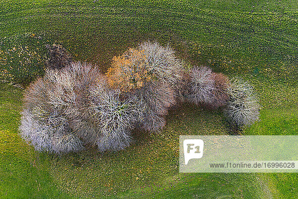 Drone view of small group of autumn trees