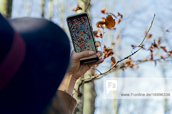 Woman taking photo of autumn leaf through mobile phone in forest