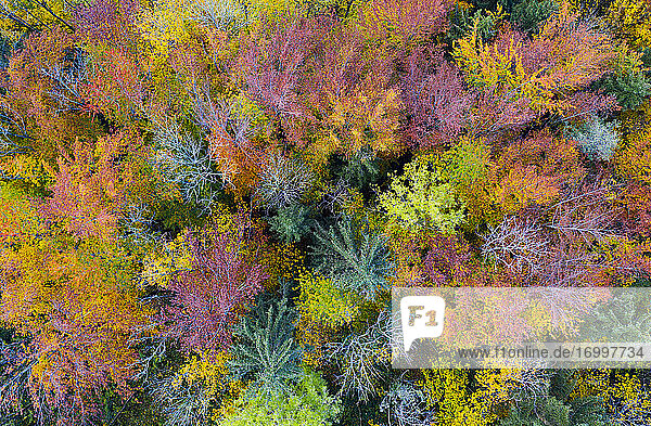 Drone view of mixed forest in autumn