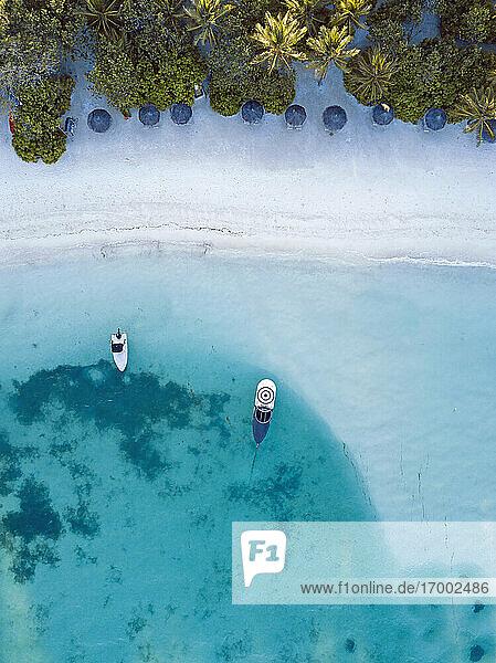 Sunshades at tropical beach  aerial view