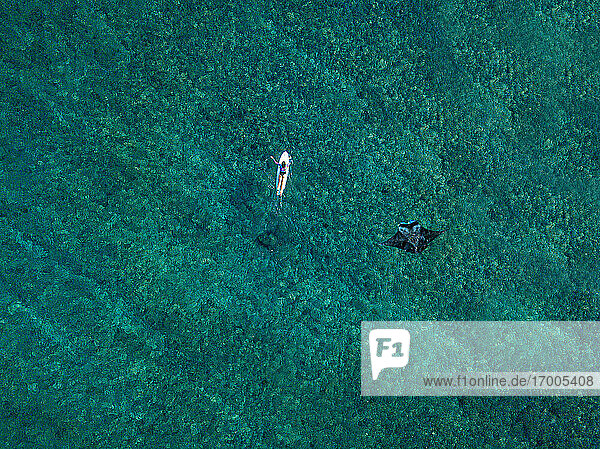 Aerial view of manta ray swimming beside lone surfer