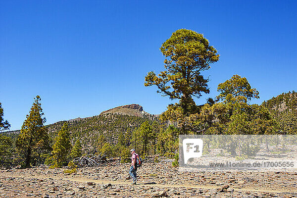 Man walking on footpath while hiking against blue sky during sunny day in Teide National Park  Tenerife  Canary Islands  Spain