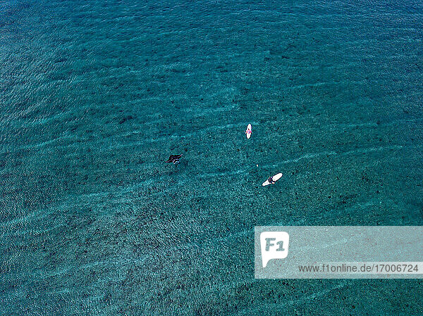 Drone view of friends sitting on surfboards with Manta Ray swimming in sea at Maldives