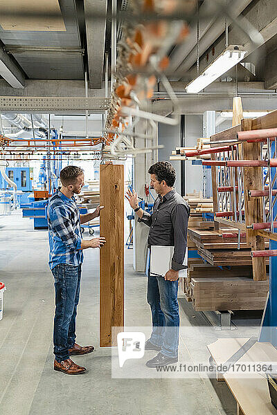 Two carpenters inspecting wooden plank in production hall