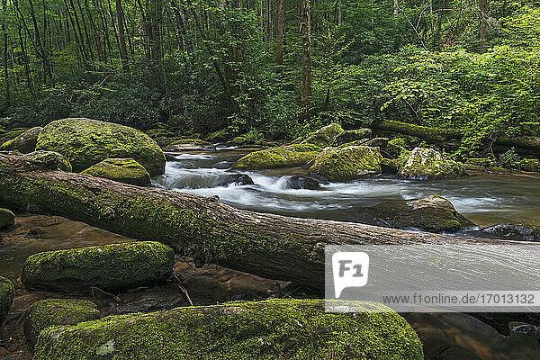 USA  Georgia  Blue Ridge Mountains  Chester Creek in den Blue Ridge Mountains