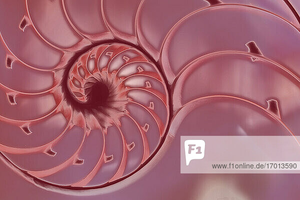 Querschnitt einer Nautilus-Schale