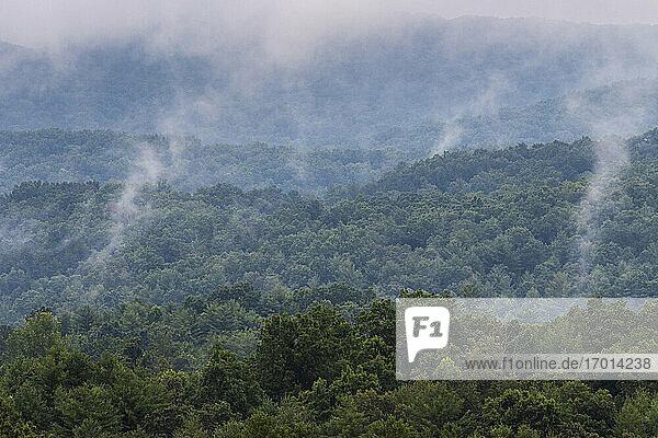 USA  Georgia  Blue Ridge Mountains  Nebliger Wald in Blue Ridge Mountains