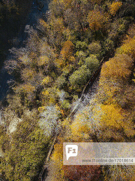 Aerial view of road stretching through autumn forest