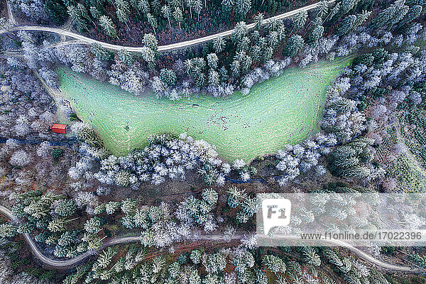 Germany  Baden-Wurttemberg  Drone view of small glade in Swabian Forest at winter dawn