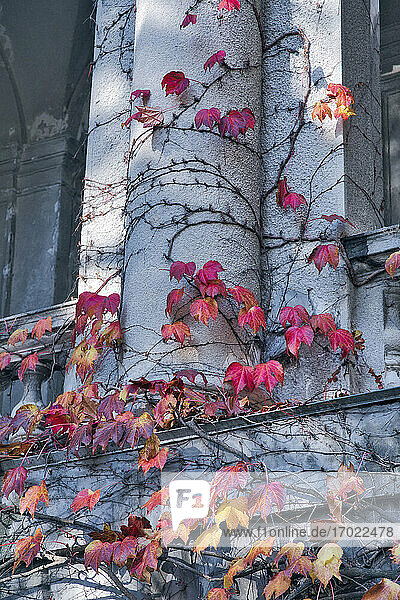 Ivy growing on architecture in park during autumn