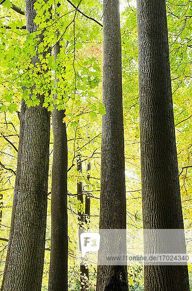 USA  New Jersey  Bäume im Herbst