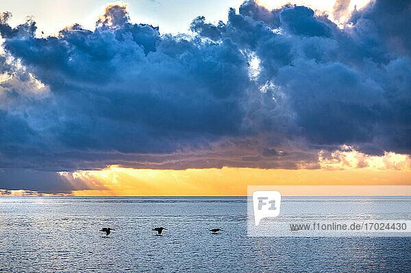 Dramatischer Sonnenuntergang Himmel über Meer mit Silhouetten von fliegenden Pelikane