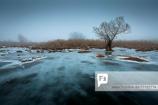 Weide im Feuchtgebiet des Flusses Turiec in der Nordslowakei.