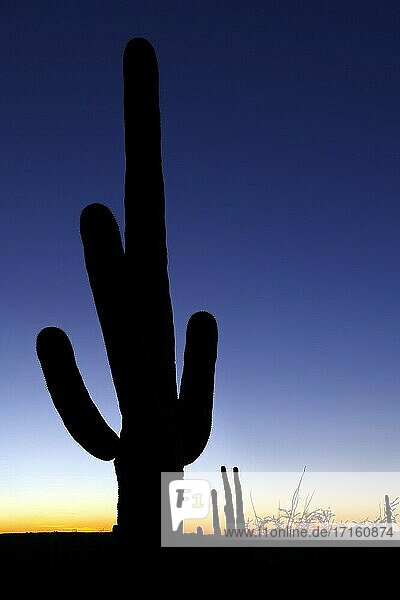 Sunset with silhouetted saguaro cactus in Saguaro National Park.