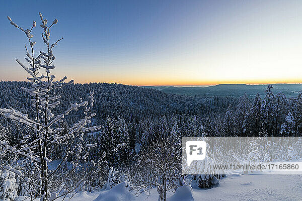 Germany  Baden Wurttemberg  Black Forest at dawn in winter