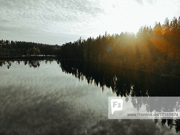 Scenic view of lake amidst pine trees against sky in forest during sunset