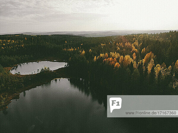 Drone shot of lake amidst pine trees against sky in forest during sunset