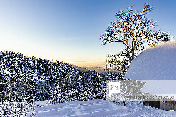 Forest hut in Southern Black Forest at dusk