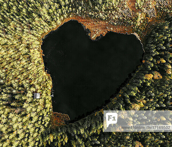 Areal view of heart shaped lake amidst pine trees in forest