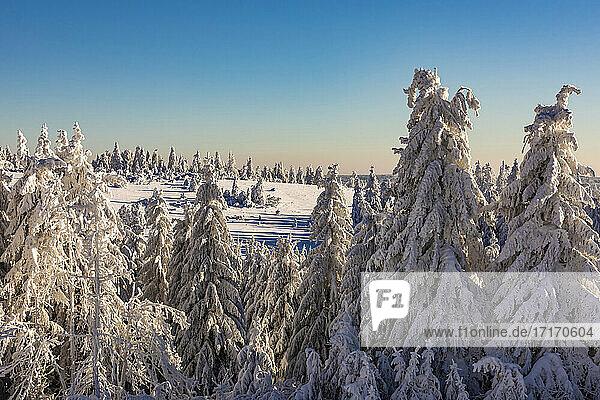 Germany  Baden Wurttemberg  Black Forest in winter