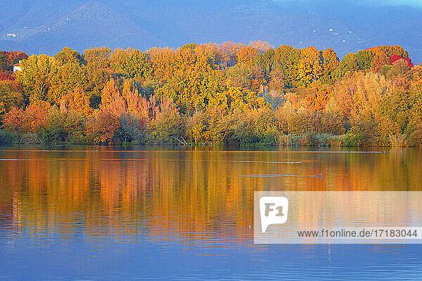 Italien  Lombardei  Provinz Lecco  Ortschaft Brivio  Adda  Fluss  Reflexe