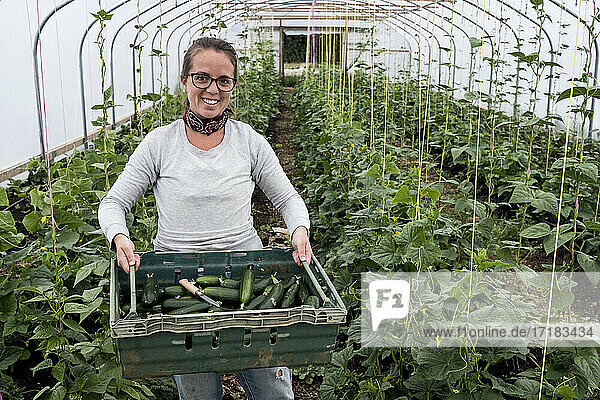 Woman standing in a poly tunnel  holding crate with freshly picked courgettes.