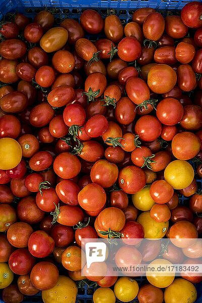 High angle close up of freshly picked cherry tomatoes.