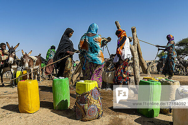 Tuaregs collecting water from a waterhole in the Sahel  north of Agadez  Niger  Africa