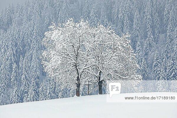 Zwei Eichen und Kreuz  Kanton Zug Schweiz