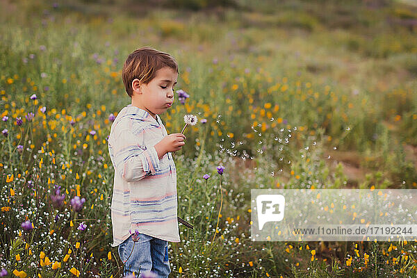 Young boy blowing a dandelion on a field of wild flowers.