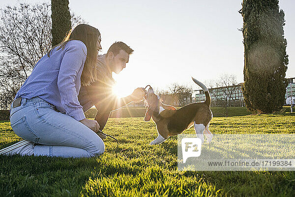 Mid adult couple playing with dog in park during sunset