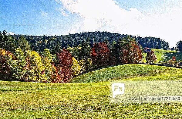 Landschaft  Suedtirol  Italien  Tschoegglberg Salten  Hafling  Herbst   landscape  Alto Adige  South Tyrol  Salten  mountains  Avelengo  autum  Salto