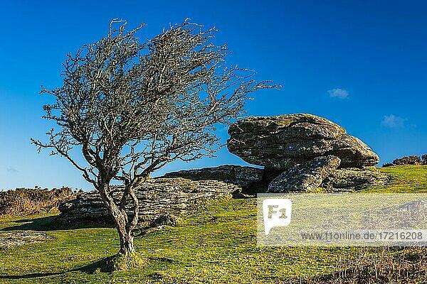 Felder und Wiesen in Haytor Rocks  Dartmoor Park  Widecombe in the Moor  Devon  England  Vereinigtes Königreich