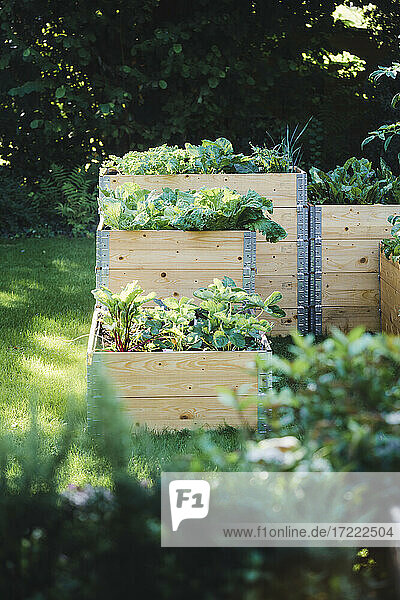 Raised beds with vegetables during summer