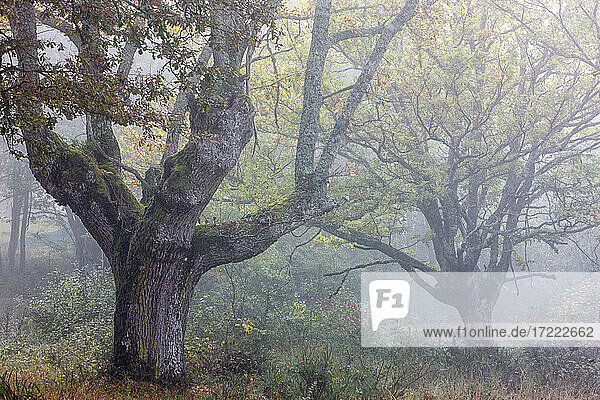 Trees at Gorbea Natural Park in foggy weather