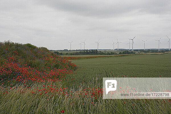 Rote Mohnblumen wachsen entlang Ackerland mit Windkraftanlagen in der Ferne