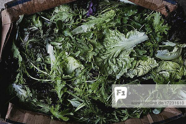 Hochwinkel-Nahaufnahme von frisch gepflückten grünen Salatblättern.
