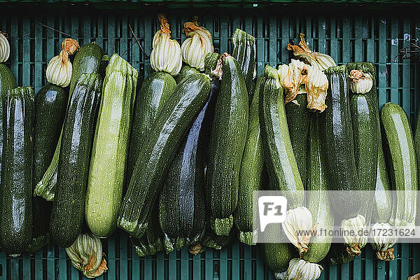 High angle close up of freshly picked courgettes.