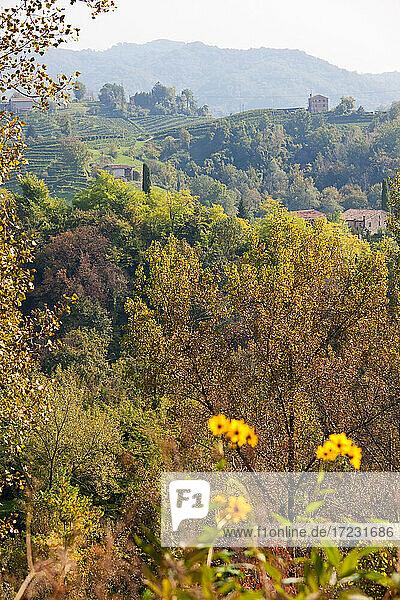 Landschaft in der Nähe des Dorfes Rolle im Bezirk Treviso