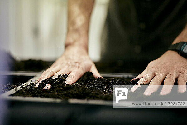 Man's hands preparing seed bed tray with compost