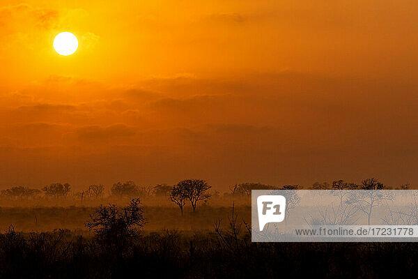 Ein Sonnenaufgang über dem Wildreservat  Baumsilhouetten im Vordergrund.