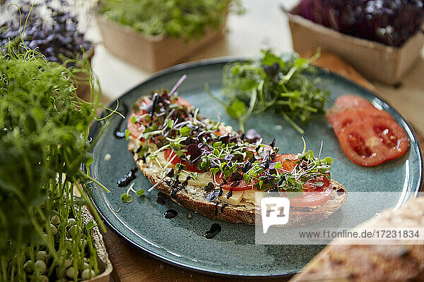 Brown bread covered with cheese  tomato and microgreens on plate surrounded