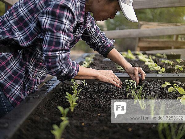 Australia  Melbourne  Woman planting seedlings at community garden