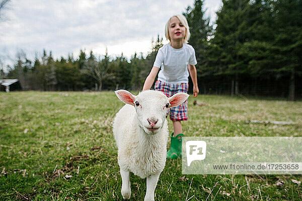 Canada  Ontario  Kingston  Boy with lamb in field