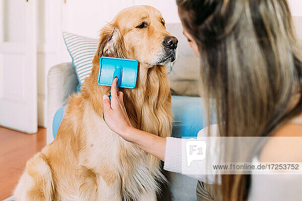 Italy  Young woman brushing dog at home