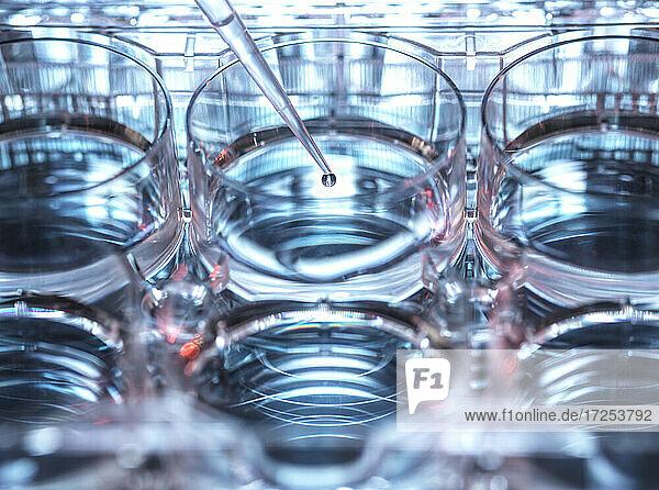 Petri dish and pipette