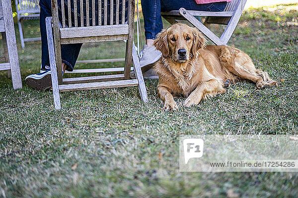 Portrait of dog lying in backyard