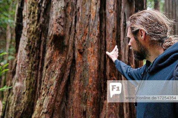 USA  California  San Francisco  Man touching large tree trunk
