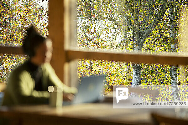 Woman working at laptop in cafe with autumn tree view